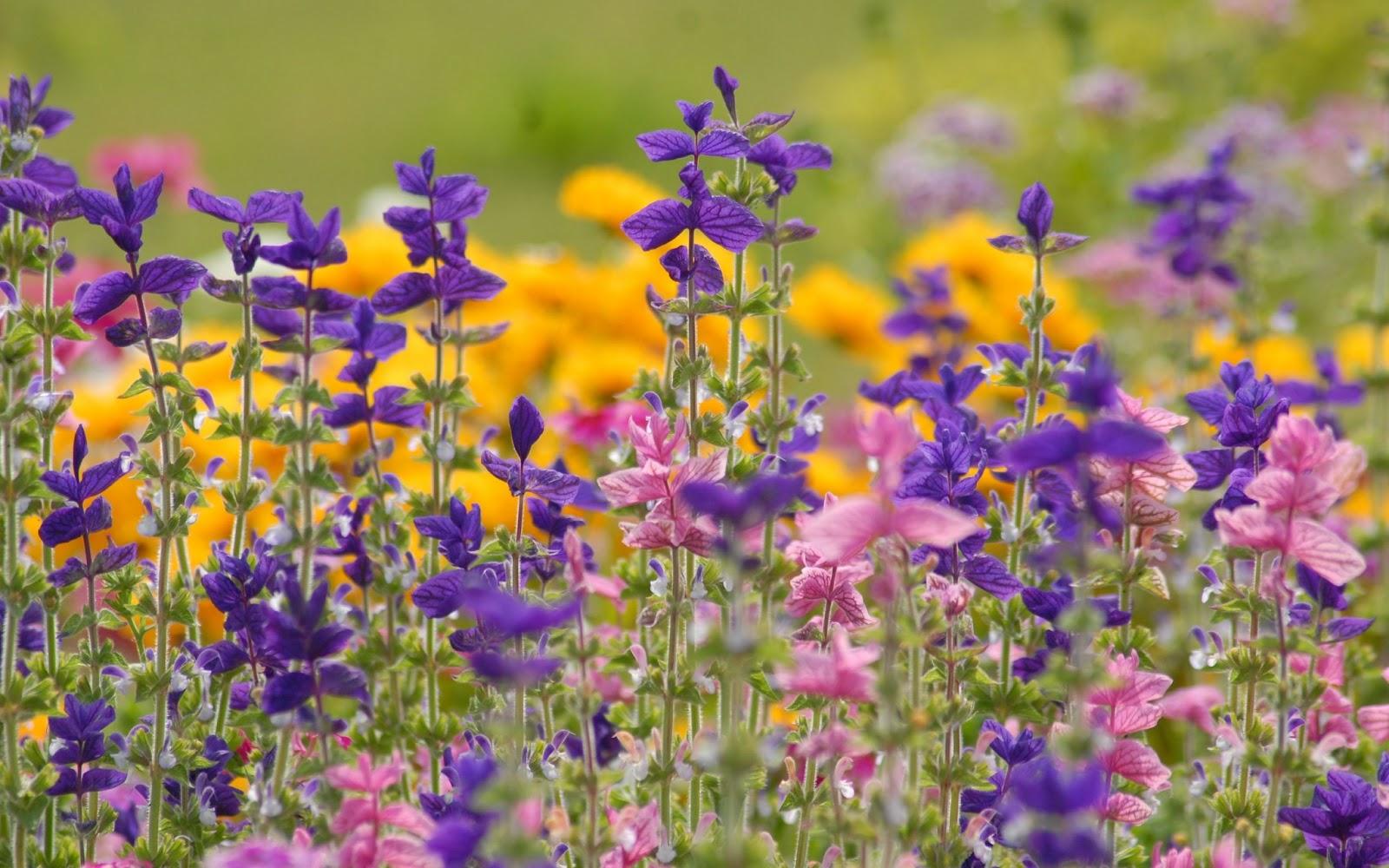 Imagenes De Fondo Flores Para Pantalla Hd 2: Descarga Fondos HD: Fondo De Pantalla Flores