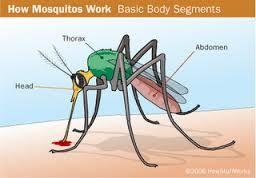 Perjalanan Luar Biasa Sang Nyamuk;Menyingkap Rahasia Alam