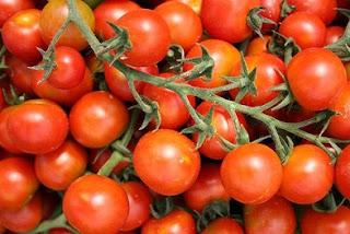 cara budidaya tanaman tomat terbaru,makalah budidaya tanaman tomat,cara budidaya tanaman tomat hidroponik,cara budidaya tanaman tomat dalam polybag,artikel tentang budidaya tanaman tomat,
