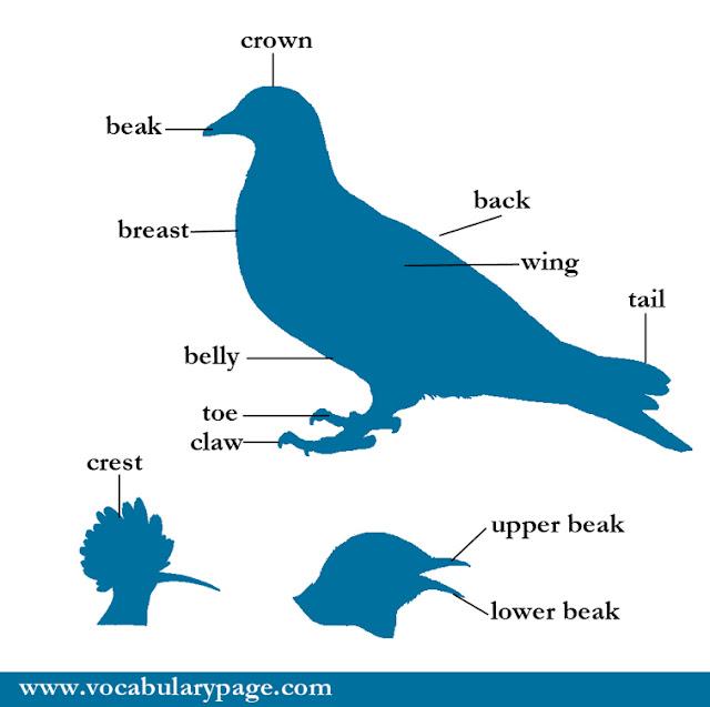 Parts of bird