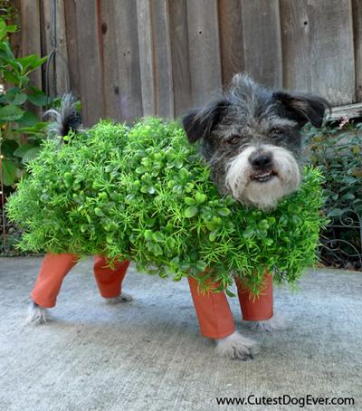 DIY Pet Halloween Costumes