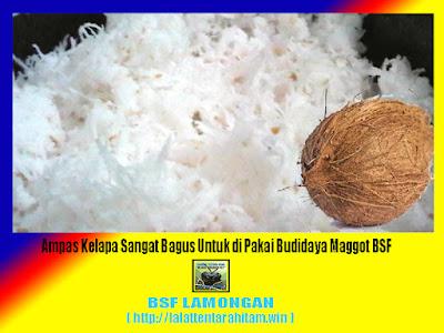 Ampas kelapa media alternatif budidaya maggot BSF