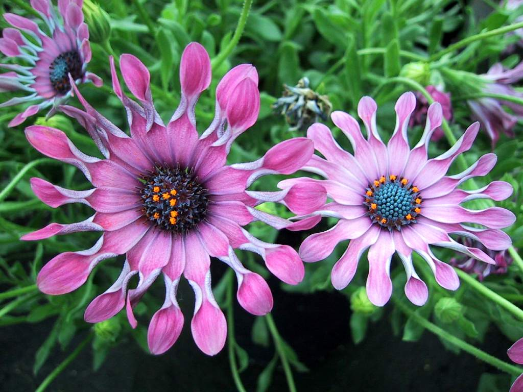 Flores del mundo bellos fondos de flores exoticas - Fotos de flores bonitas ...