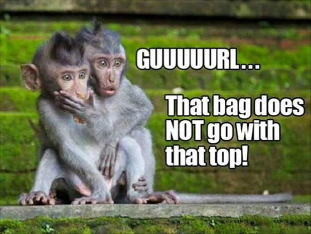 30 Funny animal captions - part 21 (30 pics), captioned animal pictures, sassy monkeys, guuurl