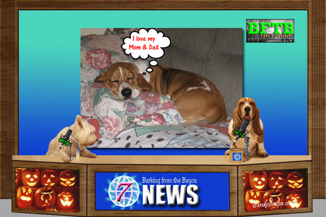 BFTB NETWoof Dog News reports on what dogs dream about