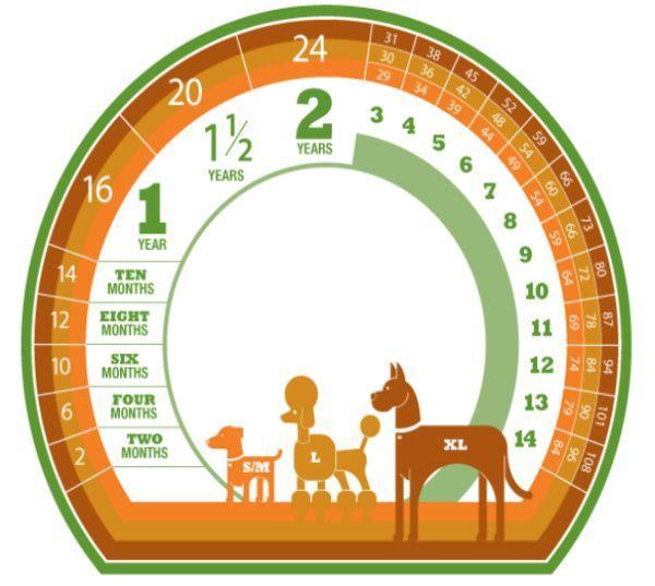 Cách xác định độ tuổi của chó