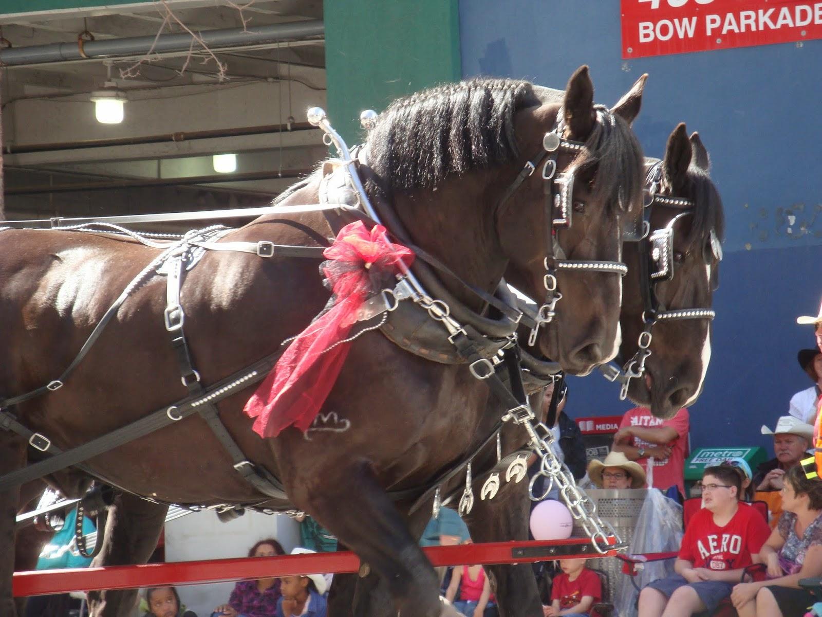 Alber 2014 Calgary Stampede Parade