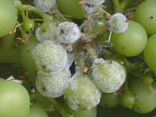 rot gris vignoble vignes blog vins vin beaux-vins