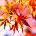 7 Bücher, die dir den Herbst versüssen!