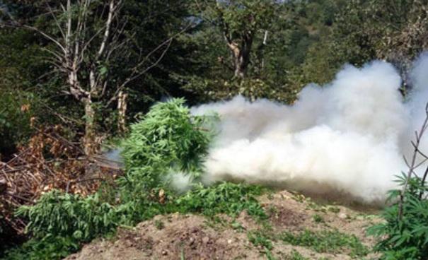 Anti-cannabis operation all over Albania