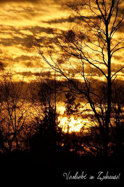 2in1 Fotoprojekt: Doppelbelichtung in Photoscape -Ausgangsbild 1 ist der Blick in die Baumkronen bei Sonnenuntergang mit Gegenlicht