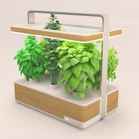 Basile est un mini jardin pour la cuisine
