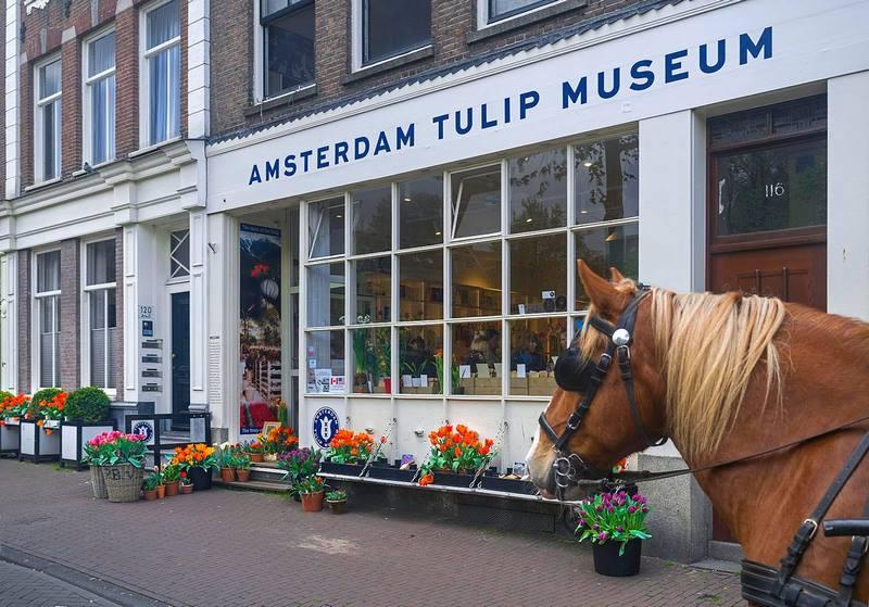 Museo del Tulipán en Amsterdam Tulip Museum