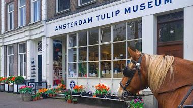 Museo del Tulipán en Ámsterdam