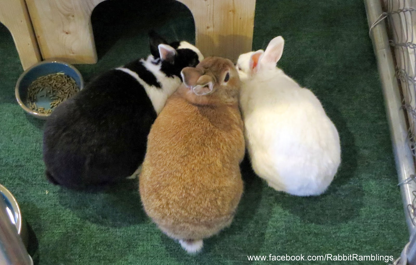 rabbit ramblings bunny food taste test