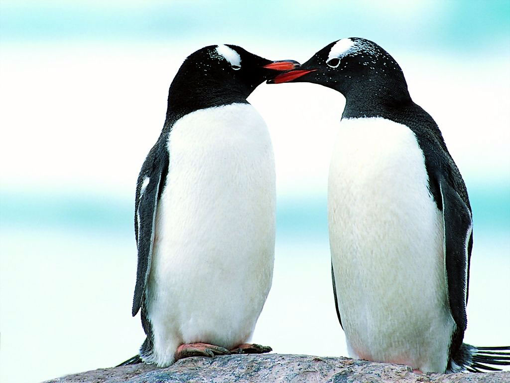 O G Penguin Fungsi Sayap pada Buru...