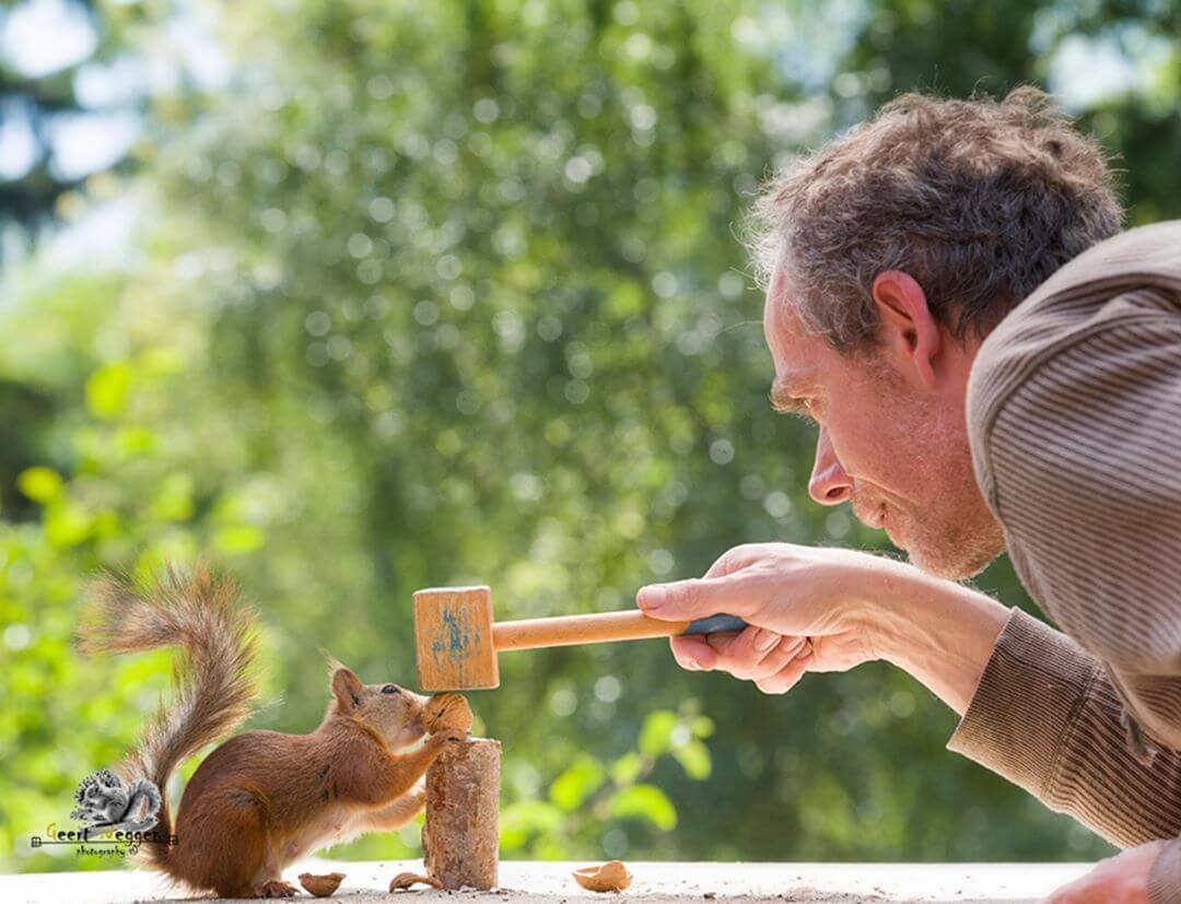Photographer Captures Charming, Extraordinary Pictures of Wild Squirrels Being Very Curious