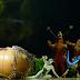 Cirque Du Soleil - Nuestra reseña