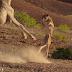 El Espectacular Momento En Que Una Jirafa Se Defiende Del Ataque De Tres Leonas