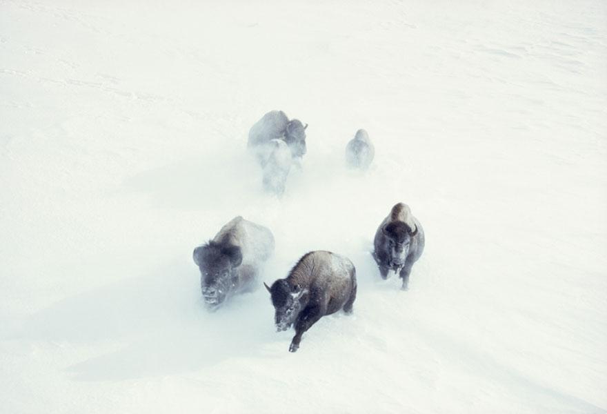 omorfos-kosmos.gr - 25 Αδημοσίευτες φωτογραφίες από το National Geographic
