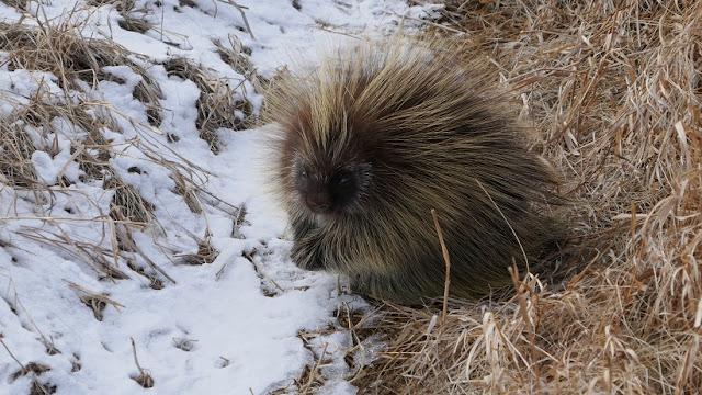 animals, Cypress Hills, Alberta, Eagle Butte