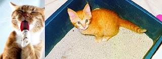 Bahaya Pasir Gumpal (Bentonite) Bagi Kucing