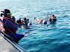 Jajaki Kehidupan Alam Bawah Laut di Bangsring Underwater