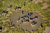 Panci Makgadikgadi Botswana, Afrika