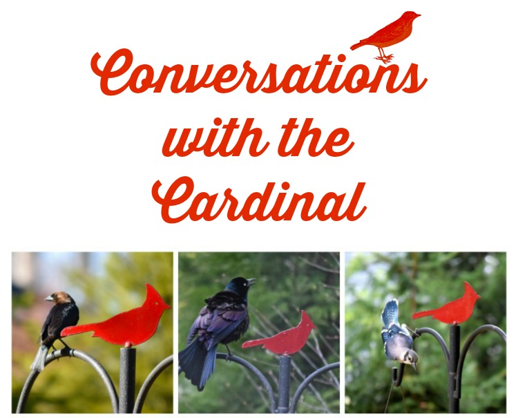 Conversations with the cardinal | Ms. Toody Goo Shoes