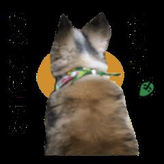 It's not a raccoon dumpling