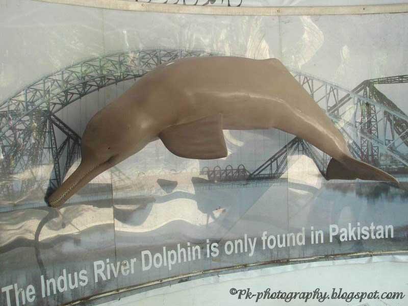 indus river dolphin zt2 - photo #22