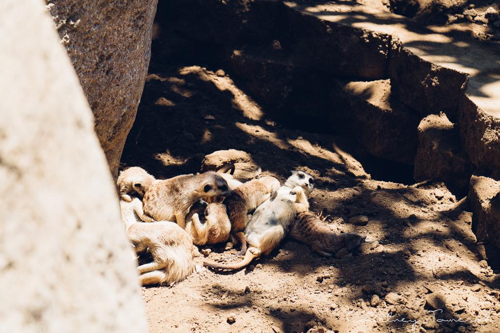 Courtney Tomesch San Diego Zoo