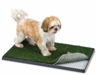 was the first house in the neighborhood to be approved by the home owners dogs artificial grass Many of the neighbors soon followed suit