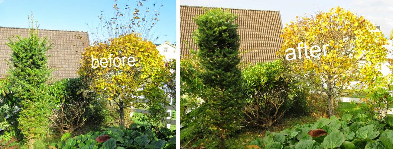 Topiary, formklippning av buskar, träd oktober 2014