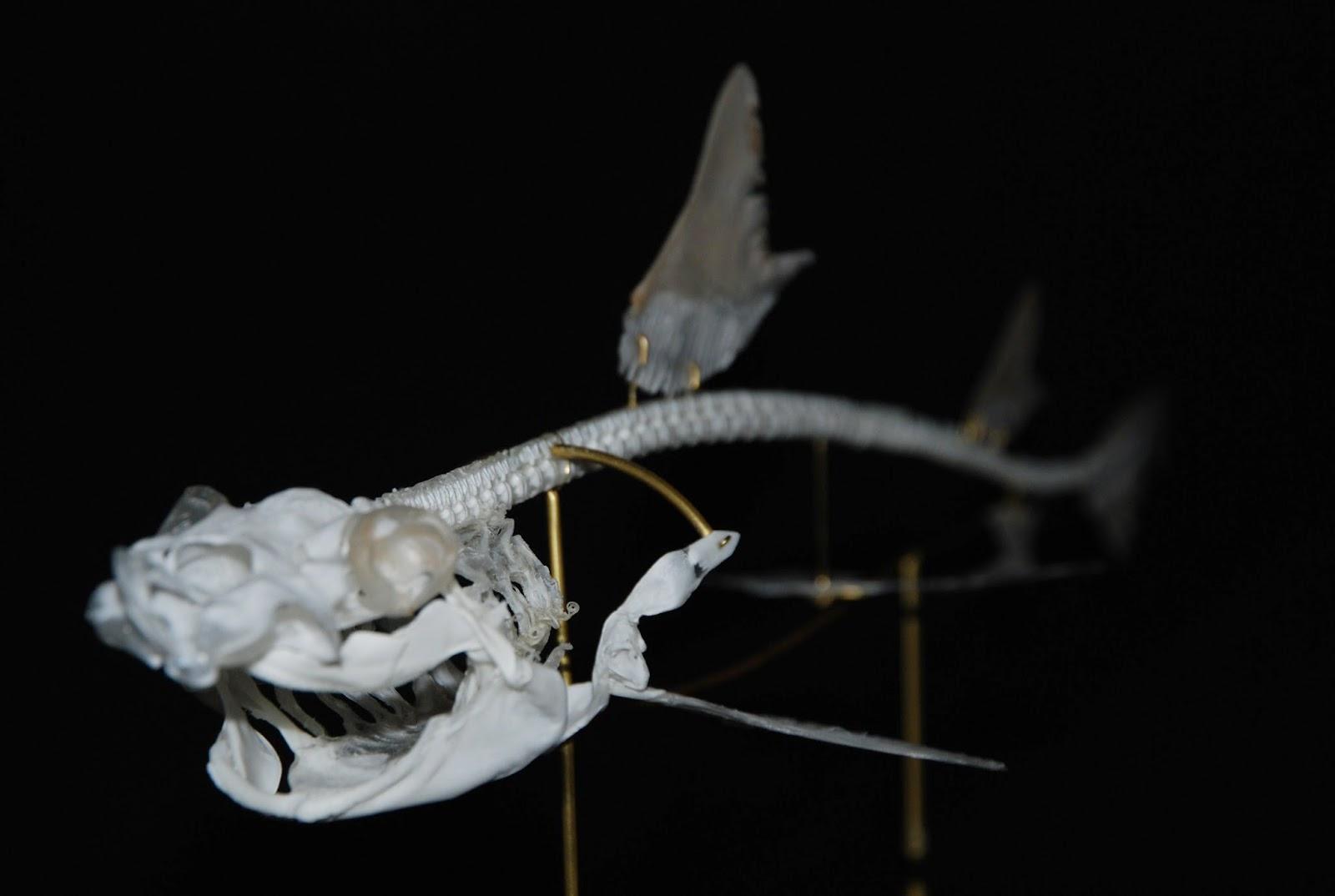 Shark Skeleton Diagram 2002 Nissan Xterra Car Stereo Wiring The Gallery For Gt Great White