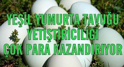 yumurta-tavukculugu