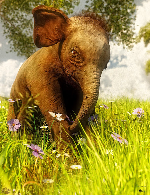 Indian Elephant Baby by AM