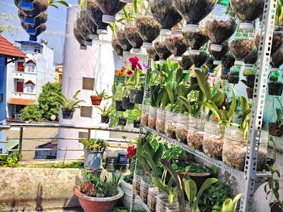 trồng lan thủy canh