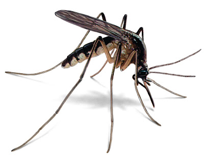What makes you more attractive to mosquitoes isn't how good you taste