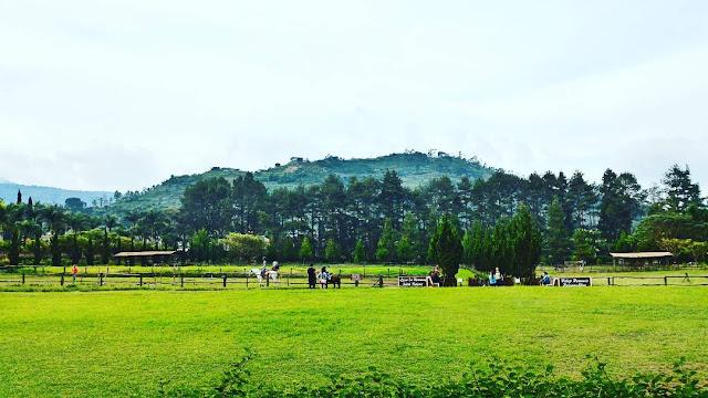 foto padang rumput hijau di de ranch lembang bandung
