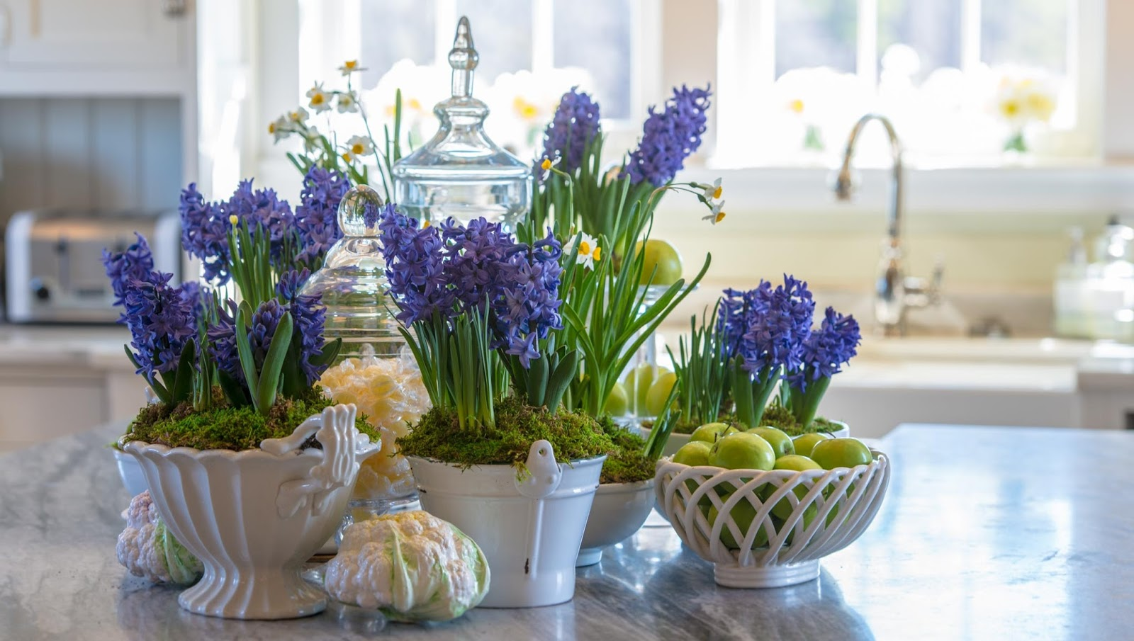 how to get a hyacinth to bloom