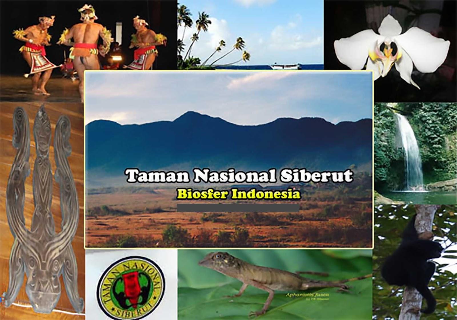 Taman Nasional Siberut Sumatra Barat
