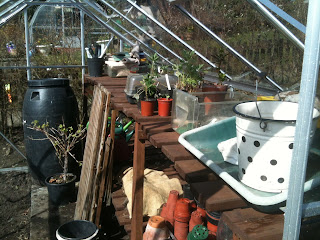 greenhouse, gardening, life on pig row