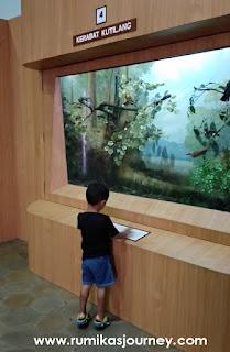 spesies burung di museum zoologi bogor