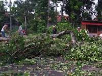 Hujan Deras Disertai Angin Kecang Sebabkan Beberapa Pohon Di Sleman Tumbang