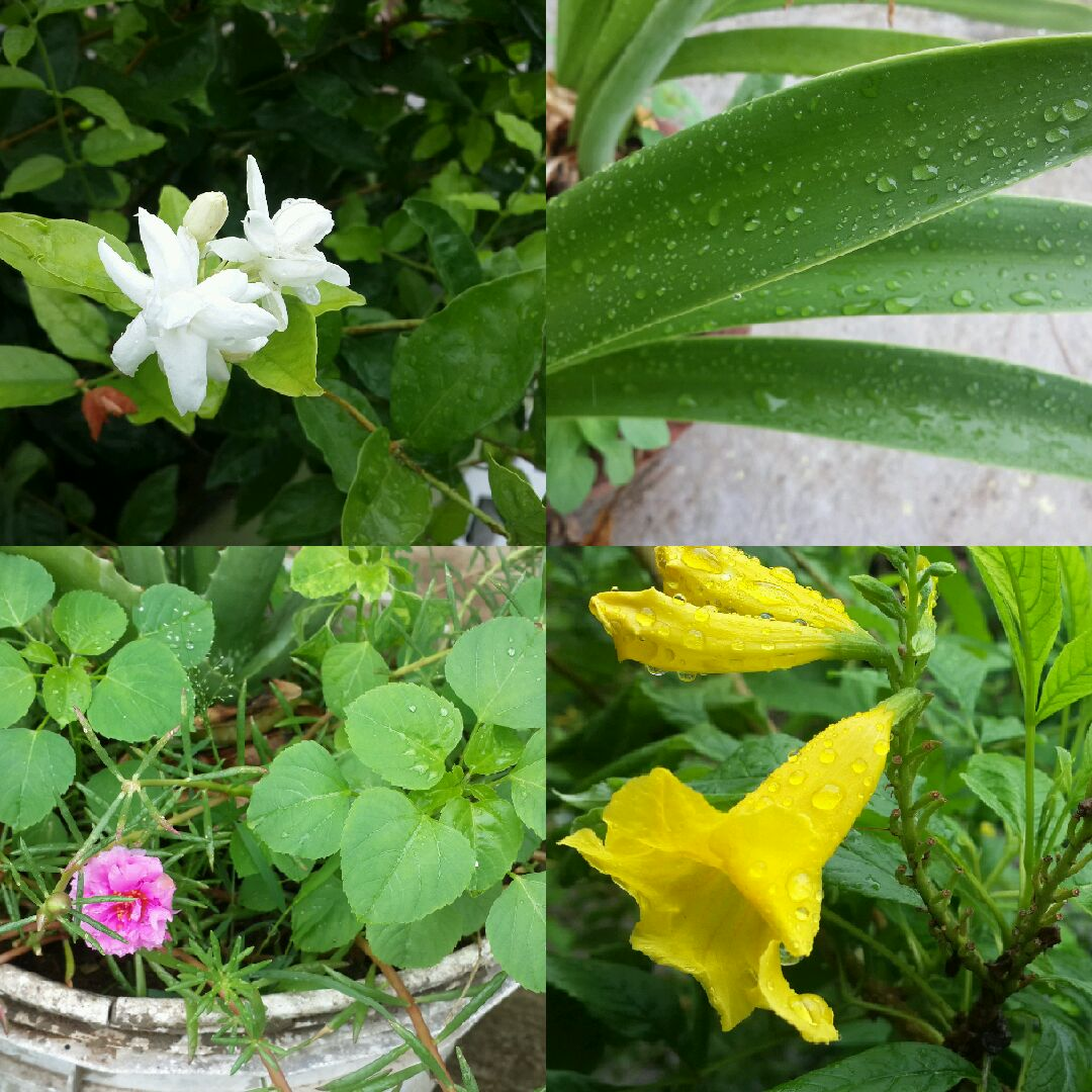 Navratna Gardening