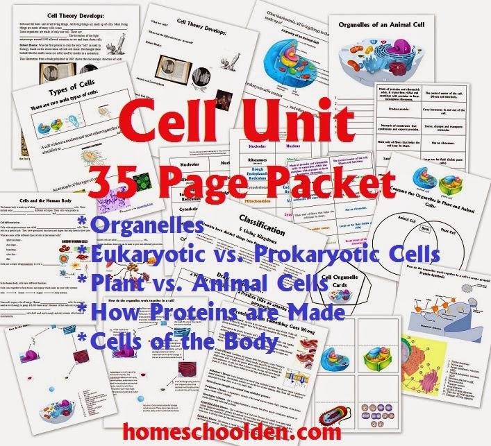 Cell Unit