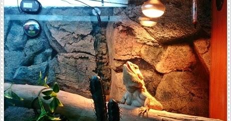 bearded dragon habitat setup