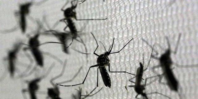 4 Fakta Penyebab Banyak dan Ganasnya Nyamuk di Indonesia