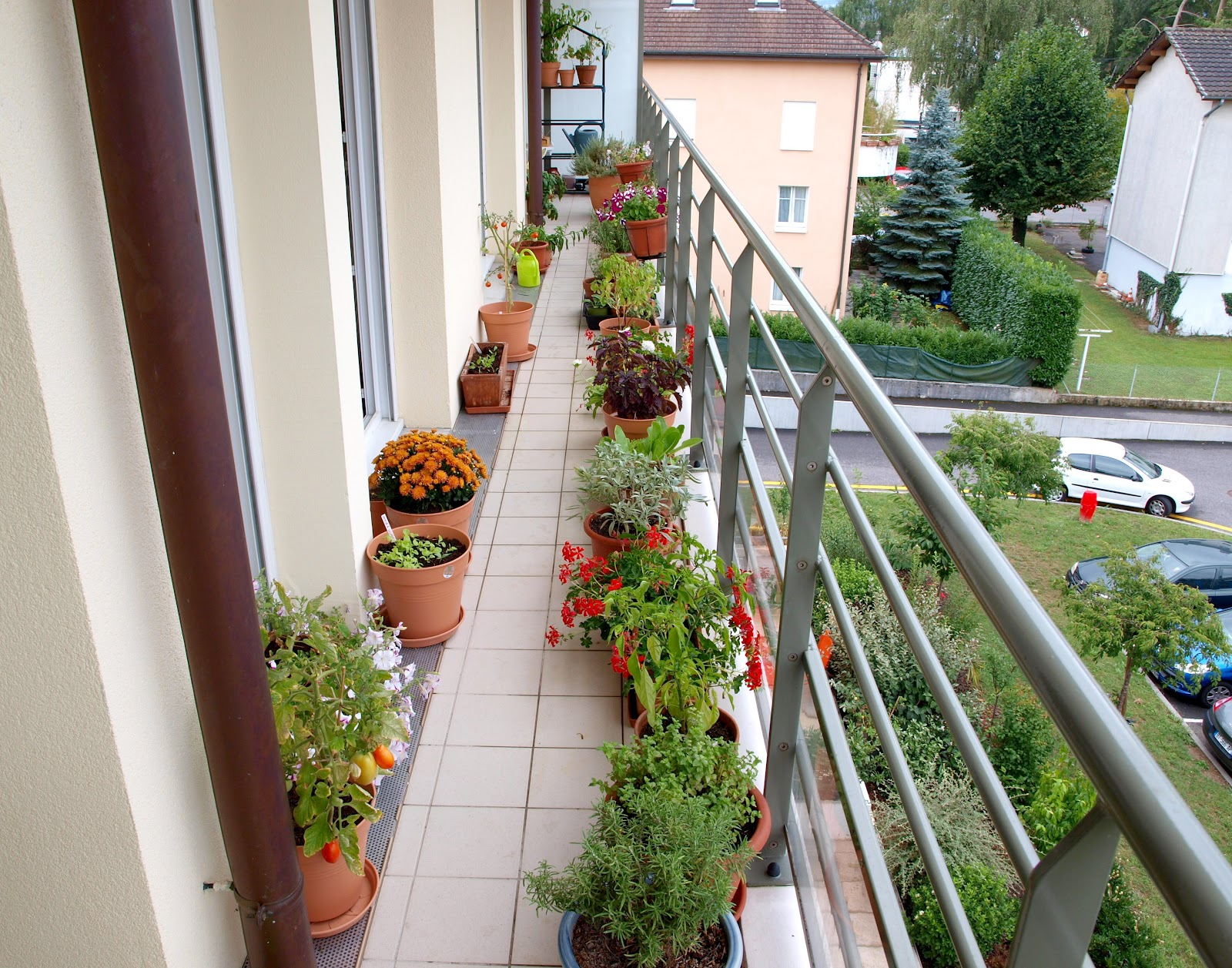 Mark 39 s veg plot fiona 39 s balcony garden for How to decorate terrace with plants